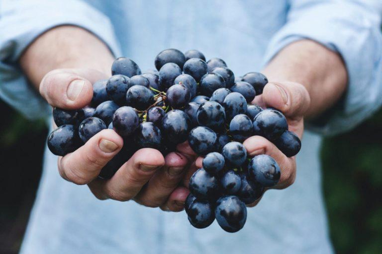 Emplois viticoles